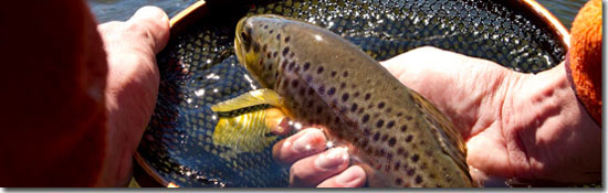 550-fly-fishing-nets-brown-trout - How to Fly Fish Guide - Step 5